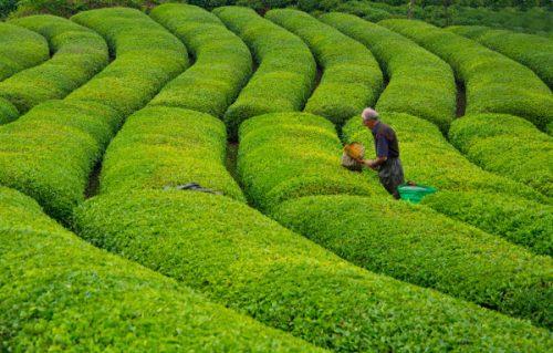 Gröna buskar i trädgården