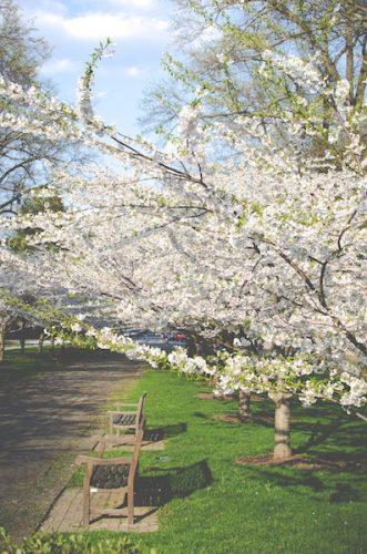 trädgårdsmöbler, bänk bland träden